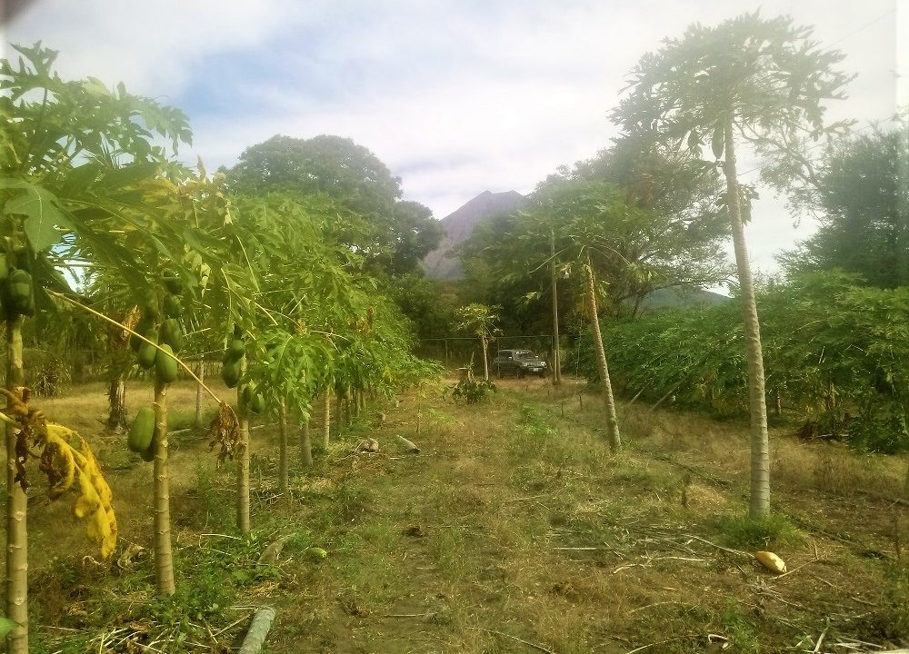 Ometepe island houses and land to sow (3)