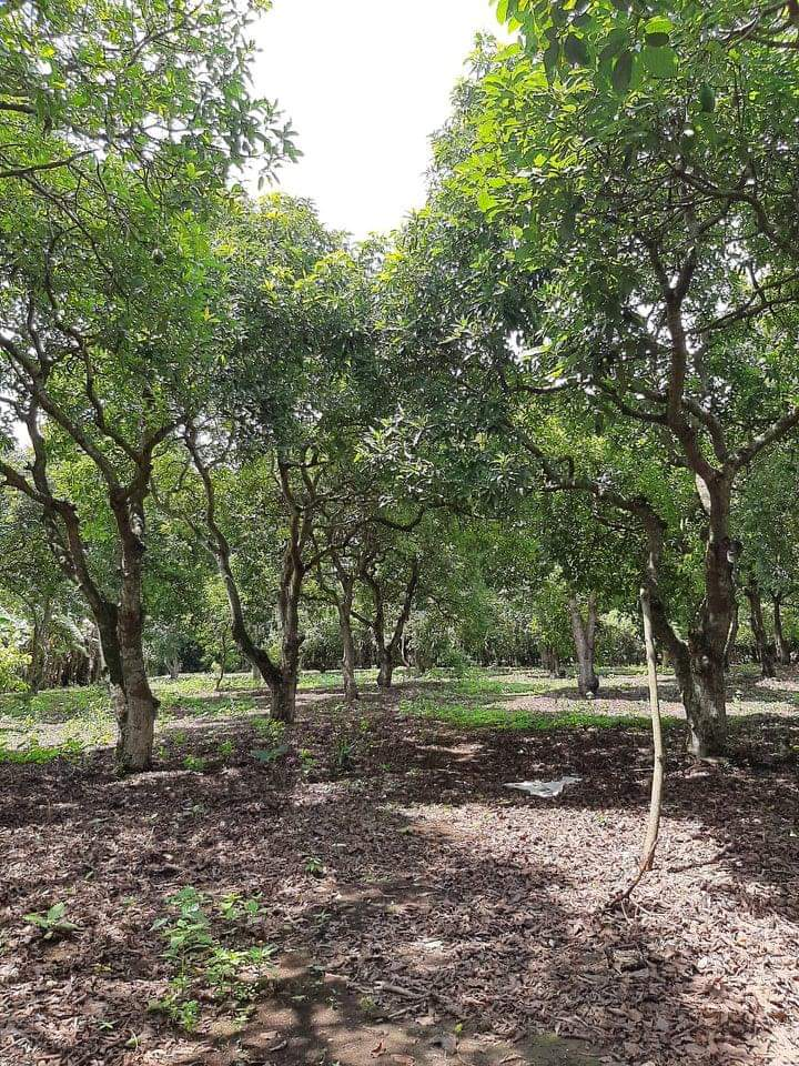 Super investment Aguacate FARM For Sale – Masatepe Nicaragua